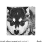 Adorable malamute puppy wall canvas | Zazzle.com – Let's Pin!