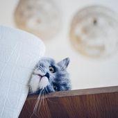 Folge meinem Instagram indem du auf das Bild klickst. Die Katze, die Sonntag nicht mag …