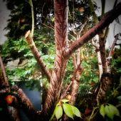 Die Natur ist total überraschend. Der Stamm eines Kirschbaums nach dem Regen …   – Gartenpflege