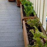 10 inspirierende Gärten für den Anbau von Lebensmitteln in kleinen Räumen – Start eines Gartens – #F …   – Diy Balcony Garden