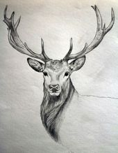 40 Free & Easy Animal Sketch Drawing Information & Ideas – Brighter Craft