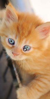 30 Mal sind Katzen nur sie selbst und machen Purrfect photobombed – #VIDEOS …