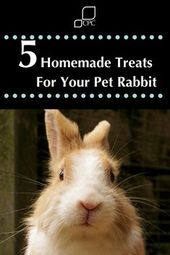 Strive these easy to make selfmade treats to your pet rabbit