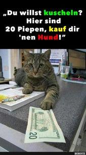 Beste Bilder, Videos und Sprüche und es gibt täglich neue lustige Facebook …   – typisch Katzen ❤
