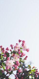 خلفيات ايفون ورد طبيعي Iphone Wallpapers Hd Download In 2020 Floral Wallpaper Iphone Spring Wallpaper Flower Wallpaper