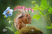 Entzückend offene Eichhörnchenfotos stellen sie sich in menschlich anmutenden Szenen vor