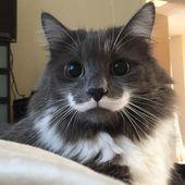Los dibujos de los abrigos de estos 10 gatos definitivamente harán que tus ojos brillen. – animales y mascotas   – katzen