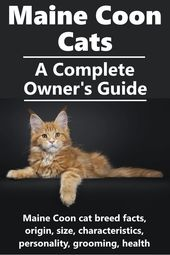Maine Coon Cats – A Complete Breed Profile – Cat Breeds
