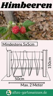 Photo of Himbeeren – altes-gartenwissen.de