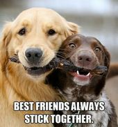 Animal Best Friends Best Friends I Love Dogs Dogs Dog Love