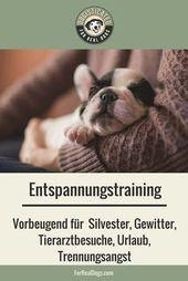 Trainieren Sie die Entspannung mit Ihrem Hund und beruhigen Sie ihn, wenn er Angst hat. H …