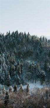 Photo of Winter Wunderland iPhone X Wallpaper #Baum #Winter #Wald #Natur #Winterwonder …