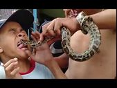 Painful mistake! Boy taunts a snake by sticking ou…