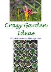 Show Plants For Garden