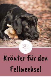 Eine Frühjahrskur für den Hund – Hund