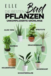 Klimaanlage: Diese Pflanzen sind ideal für zu Hause!
