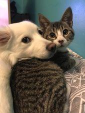 14 superniedliche Fotos von Freundschaften zwischen Hund und Katze