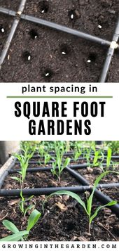 Plant Spacing in Square Foot Gardens   – GARDENING