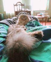 My morning pleasure   #scottishfold #bigeyes #pet #animallovers #meow