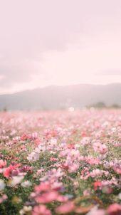 (notitle)-花を買ってください-#buy #Flowers #notitle   – blumen