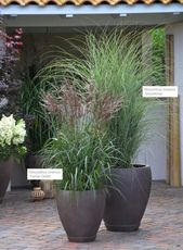 Photo of Asian terrace – XXL plants