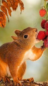 Animal Pet Squirrel Cute Squirrel Squirrel Photography Animal Photography S Animal Animalphotography In 2020 Squirrel Pictures Animals Wild Cute Squirrel