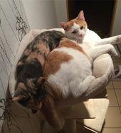 Guten Morgen, . ich glaube meine Katzen haben endlich den neuen Kratzbaum entdec… – Dogs