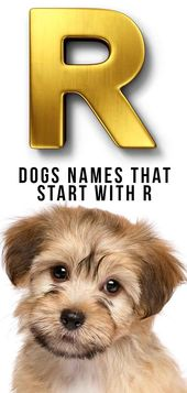 Dog Names That Start With R Clever Ideas For Your New Dog Dog Names Funny Dog Names Clever Dog Names