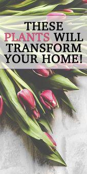 9 Zimmerpflanzen für Ihr Zuhause und Ihre Gesundheit – Gardening for Small Homes