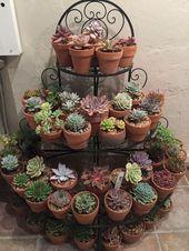20+ best succulent gardens designs for indoor and outdoor hajarfresh.com / ….   – Pflanzen Ideen