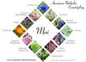 Blumen des Monats Mai Pfingstrose Maiglöckchen Hochzeit Blumen Hochzeit …   – Hochzeit