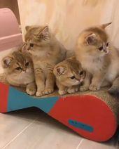 Diez razones increíbles por las que los gatos son las mejores mascotas #cat #catlover #catfacts #ilovecats #cats    – Katzen & Freunde