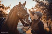 Horses – meschkat-fotografies Webseite!