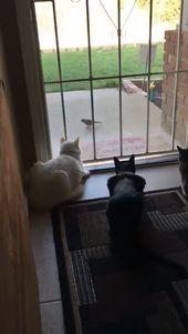 haha die katzen beobachten den vogel, erschrocken als sich der hund nähert   – Süße Tierchen