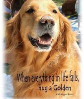 All the things we adore about the Intelligent Golden Retriever Pups #goldenretri…  – Animals