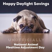 Daylight Savings Time Daylight Savings Daylight Saving Dog