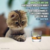 Sad cat – Just Plain Fun