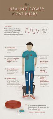Faszinierende Infografik zeigt, wie gut das Schnurren einer Katze für Sie ist