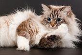 7 Dinge, die Sie möglicherweise nicht über Ihre Katze wissen
