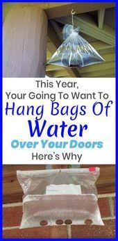 40 maneras de repeler las plagas este verano