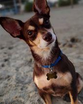 🔐17/01/2016🔐 #pinscher #dog #instadog #dogsofinstagram #dogs #   – Pet Ideas