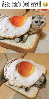 Lustige katzen zusammenstellung lustige katzen videos zusammenstellung