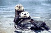 Animales en inglés: los 99 más utilizados. – Inglés con fluidez   – Atividades para educação infantil
