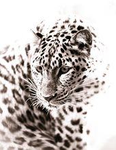 Leopard Art – Monochrom Tier Artwork – Wildlife Home Decor – Wandkunst zeitgenössische Kunstfotografie