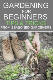 #Gardenforbeginners #Gardening #for #Beginners  Gardening for Beginners * Garden…,  #Beginn…   – Gartentipps Für Anfänger Blog