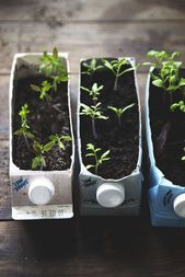 v 11. Tomato tips, the three sisters and a nomination – Self-catering project