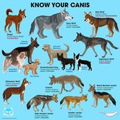 Pin By Pet Compared Pet Products Pe On Animals Animals Dog Facts Animals Wild