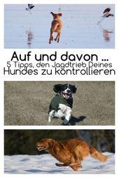 5 consejos para controlar el instinto de caza   – Hundezeugs