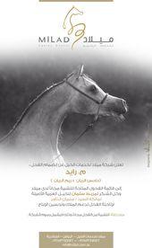 ميلاد الفحل م رايد متاح للتشبية مجانا Arabian Horse Poster Horses