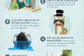 Wie Katzen die Web-Infografik beherrschen